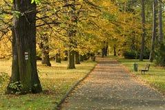 Parque en otoño o caída Fotografía de archivo