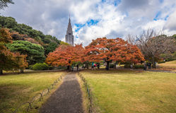 Parque en otoño, Tokio, Japón de Shinjuku Gyoen Fotografía de archivo libre de regalías