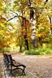 Parque en tiempo de caída Imagen de archivo libre de regalías