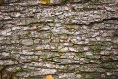 Parque en Ucrania, corteza de árbol Fotos de archivo