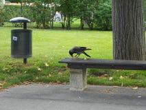 Parque en Viena Imagen de archivo libre de regalías
