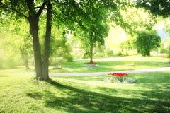 Parque ensolarado Fotografia de Stock Royalty Free