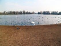 Parque escondido, patos, Pidgeons e mais, o grupo dos pássaros Foto de Stock Royalty Free