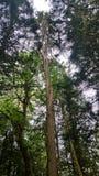 Parque estadual da montanha do squak da árvore do pretzel imagens de stock