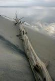 Parque estadual da praia da ilha Milhas de dunas de areia e do bea arenoso branco Imagens de Stock