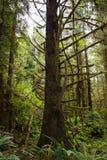 Parque estadual das sequoias vermelhas de Prairie Creek Imagem de Stock