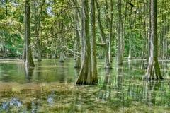 Parque estadual de Chicot Imagem de Stock