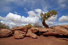 Parque estadual de DeadHorse Fotos de Stock Royalty Free