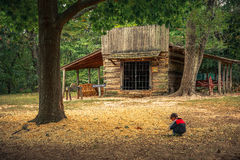Parque estadual do campo de batalha do bosque da pradaria Foto de Stock Royalty Free