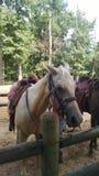 Parque estadual do Chickasaw foto de stock royalty free