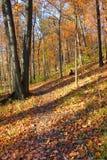 Parque estadual Illinois de Kickapoo Imagem de Stock