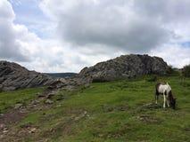 Parque estadual Virgínia de Pony Of The Grayson Highlands dos cavalos selvagens imagem de stock royalty free