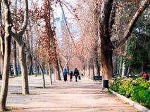 Parque Forestal Stock Photos