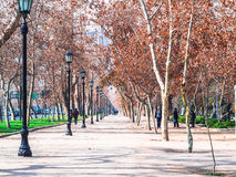Parque Forestal Stock Images