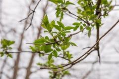 Parque fotografiado de la primavera Foto de archivo