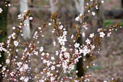 Parque fotografiado de la primavera Fotos de archivo libres de regalías
