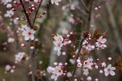 Parque fotografiado de la primavera Imágenes de archivo libres de regalías