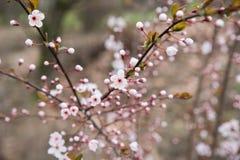 Parque fotografiado de la primavera Imagenes de archivo