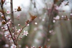 Parque fotografiado de la primavera Fotografía de archivo