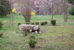 Parque fotografiado de la primavera Fotografía de archivo libre de regalías