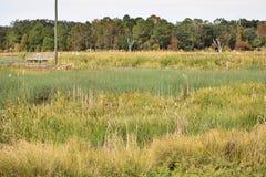 Parque Gainesville la Florida de los humedales de Sweetwater Fotos de archivo