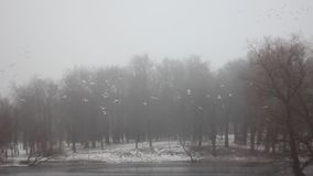 Parque Gatchina do inverno filme