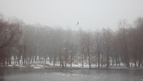 Parque Gatchina do inverno video estoque
