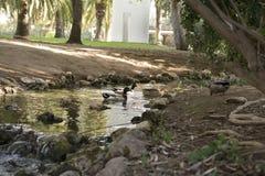 Parque gemeentelijk DE La Eliana Town Stock Foto