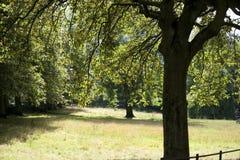 Parque, Glasgow, Escocia, Reino Unido, septiembre de 2013, parkland y ?rboles de Kelvingrove en el parque de Kelvingrove fotografía de archivo libre de regalías
