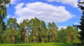 Parque grande Alexandría, Ucrania del claro foto de archivo