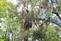 Parque grande da árvore de Sanford FL Fotografia de Stock Royalty Free