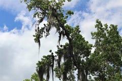 Parque grande da árvore de Sanford FL Fotografia de Stock