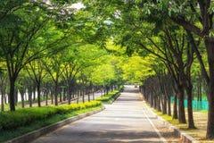 Parque grande de Incheon Imagem de Stock Royalty Free