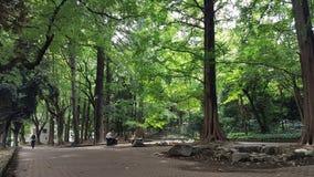 Parque Greeny perto da torre de tokyo Imagem de Stock Royalty Free
