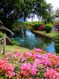 Parque hermoso con la fuente natural y las flores rosadas Foto de archivo libre de regalías