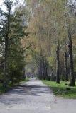 Parque hermoso de la primavera con un camino Parque hermoso del abedul en un día soleado Imagen de archivo libre de regalías