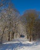 Parque hermoso del callejón del invierno Foto de archivo libre de regalías