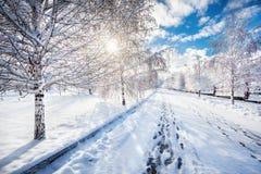 Parque hermoso del invierno Foto de archivo