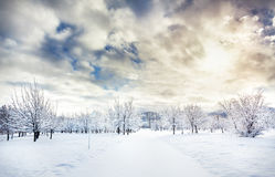 Parque hermoso del invierno Imagen de archivo