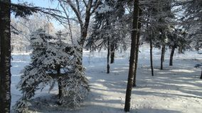 Parque hermoso del invierno con diversos árboles Fotografía de archivo libre de regalías