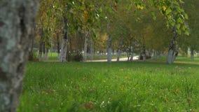 Parque hermoso del otoño almacen de metraje de vídeo