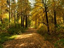 Parque hermoso del otoño del bosque del otoño, paisaje imagenes de archivo