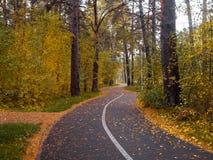 Parque hermoso del otoño del bosque del otoño, paisaje colorido Paisaje colorido Otoño imagenes de archivo