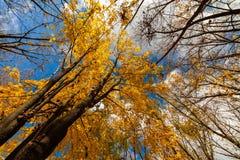 Parque hermoso del otoño en el amanecer Autumn Landscape Imagen de archivo