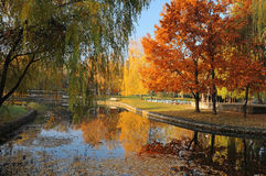 Parque hermoso del otoño Foto de archivo