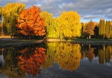 Parque hermoso del otoño Fotos de archivo