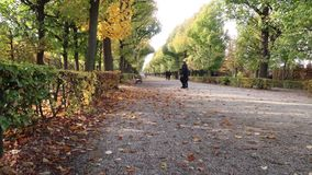 Parque hermoso en el otoño Viena