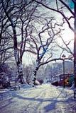 Parque hermoso en invierno Fotos de archivo libres de regalías