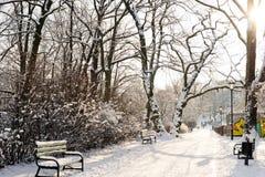 Parque hermoso en invierno Fotografía de archivo