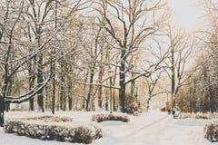 Parque hermoso en invierno Foto de archivo